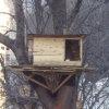 treehouse2