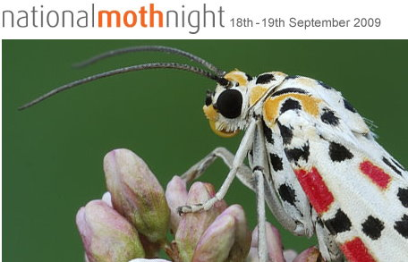 mothnight