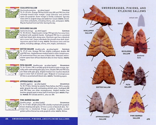 Peterson Field Guide to Moths of Northeastern North America - simulated image