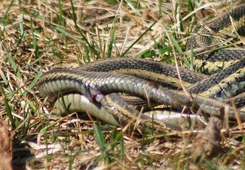 Venom cure: Snake love - - DAWN.COM